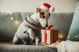 6 Ways to Keep Your Pets Safe During the Holidays